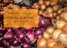 Viaggio alla scoperta della cipolla di Cannara
