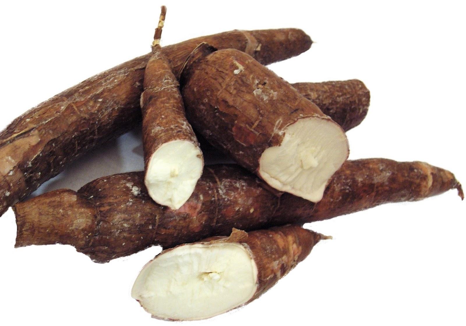 Manioca yucca la radice dai mille usi la forchetta for Radici commestibili