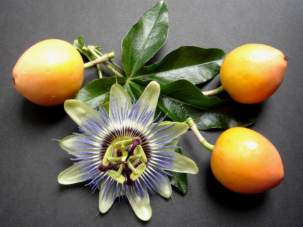passion-fruit-d
